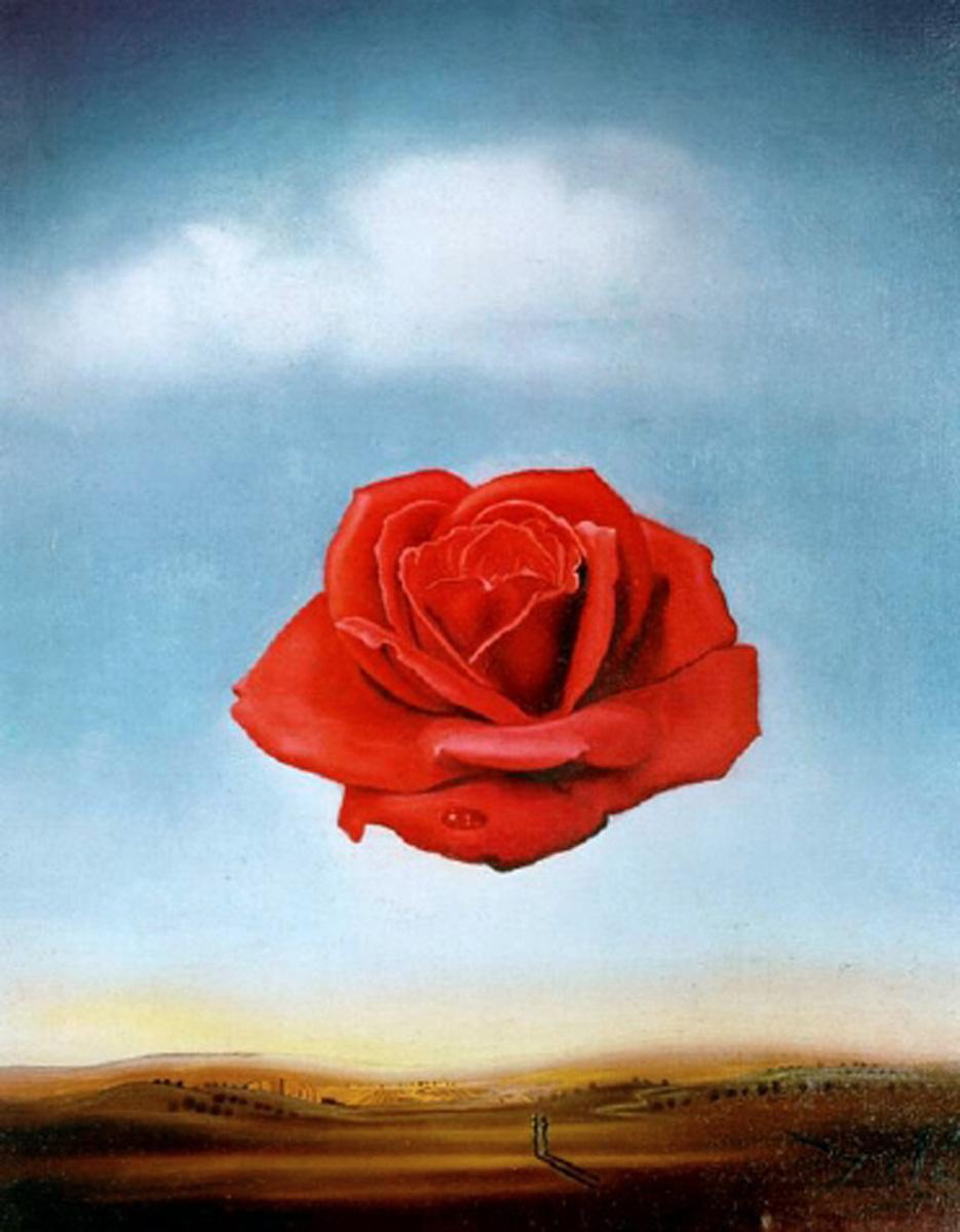 Dali - la rosa meditativa